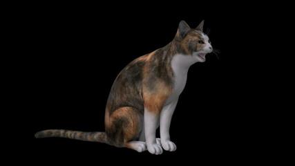 Calico Cat Walks, Sits, Licks Paw, Yawns