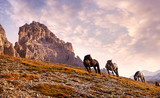 Beautiful horses in the Dolomites