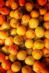 Mirabelle, Prunus domestica