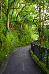 Road to forest, lugard road, Hongkong, China
