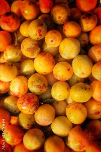 canvas print picture Mirabelle, Prunus domestica