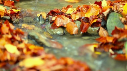 Autumn leaf on stone in a creek