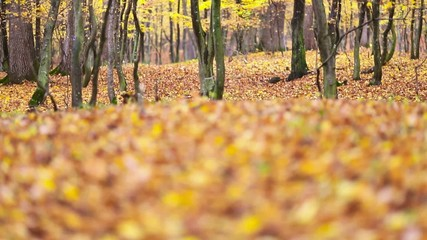 Autumn forest with leaf