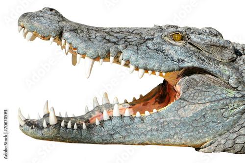 In de dag Krokodil crocodil