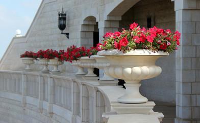 vase, red flowers