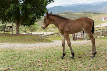 foal in rural Mexico