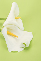 white lilly flowers on green