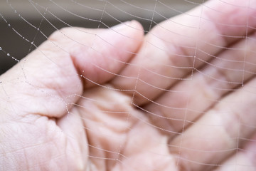 Partial Spider Web in Front of a Hand