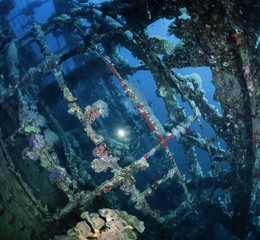 SUDAN, Red Sea, U.W. photo, wreck diving, Umbria wreck