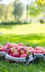 apples in basket outdoor