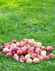 heap of apples outdoor
