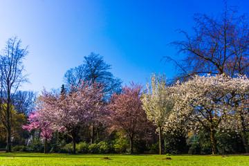 Spring nature background.  Spring landscape