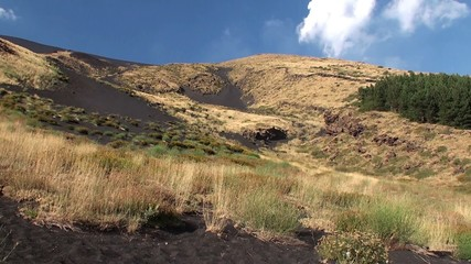 Plant species diversity at the foot of Mount Etna. Sicily
