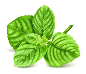 Fresh green mint.