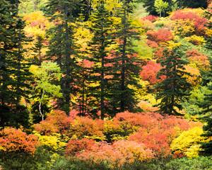 大雪山滝見沼の紅葉