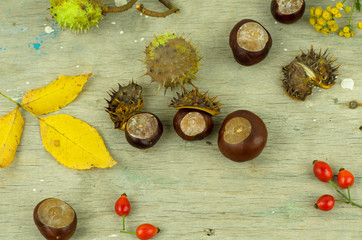 autumn chestnuts and arrow