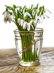 snowdrop flowers on a table