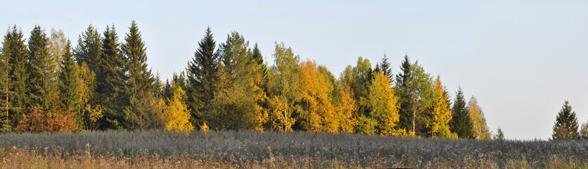 Panorama of autumn forest and blue sky