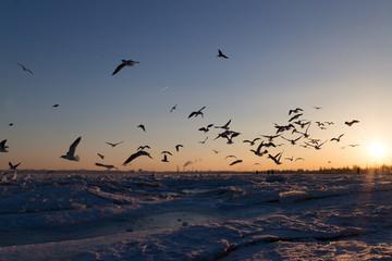 закат на замерзшем море