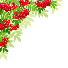 Vector background with rowan branches.