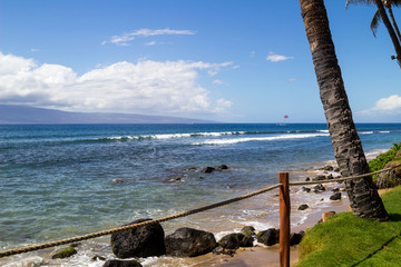 Palm on the beach, Hawaii