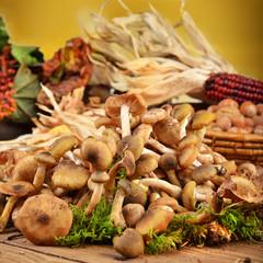 funghi chiodini atmosfera autunnale