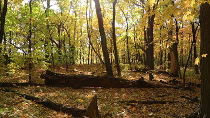 beautiful autumn forest with sun shining - slider dolly shot