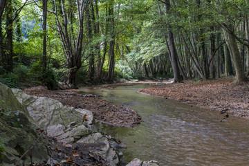 A quiet creek meanders through a dense vegetation