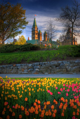 Tulips and Parliament Building Ottawa, Ontario Canada