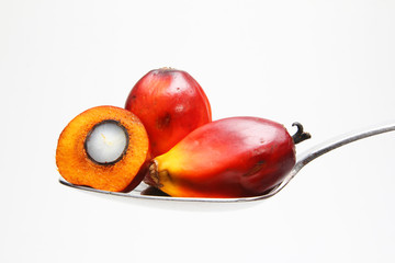 Oil palm fruits on spoon
