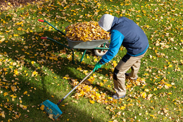 Gardener during autumn time