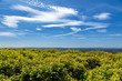 canvas print picture - Panorama Eifel