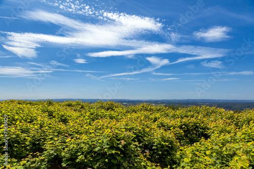 canvas print picture Panorama Eifel