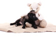 Black puppy playing with toy bear