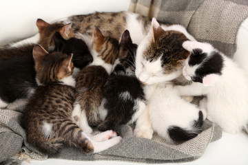 Cute little kittens with their mom, close up