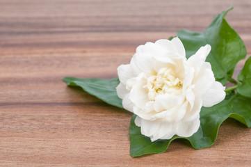 Jasmine white flower on wooden background.