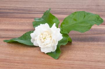 .Jasmine white flower on wooden background.