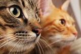Two cats closeup