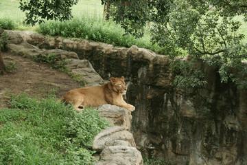 Lion of philosophy 3