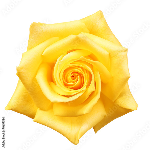Foto op Plexiglas Roses Yellow Rose isolated