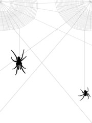 two spiders and upper web corners