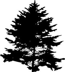 fir tree black isolatedsingle  silhouette illustration