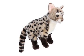 Wildkatze: Ginsterkatze aus Plüsch freigestellt auf Weiß