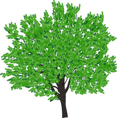 brown tree with bright green leaves