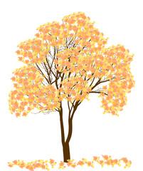 yellow and orange autumn tree isolated on white