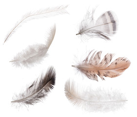 collection of six isolated feathers