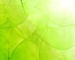 Leinwandbild Motiv green background from thin leaves