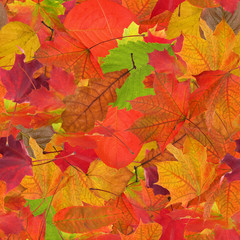 seamless background from fall leaves
