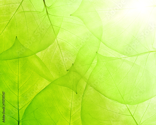 Aluminium Textures green background from thin leaves