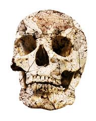 isolated rotten human skull
